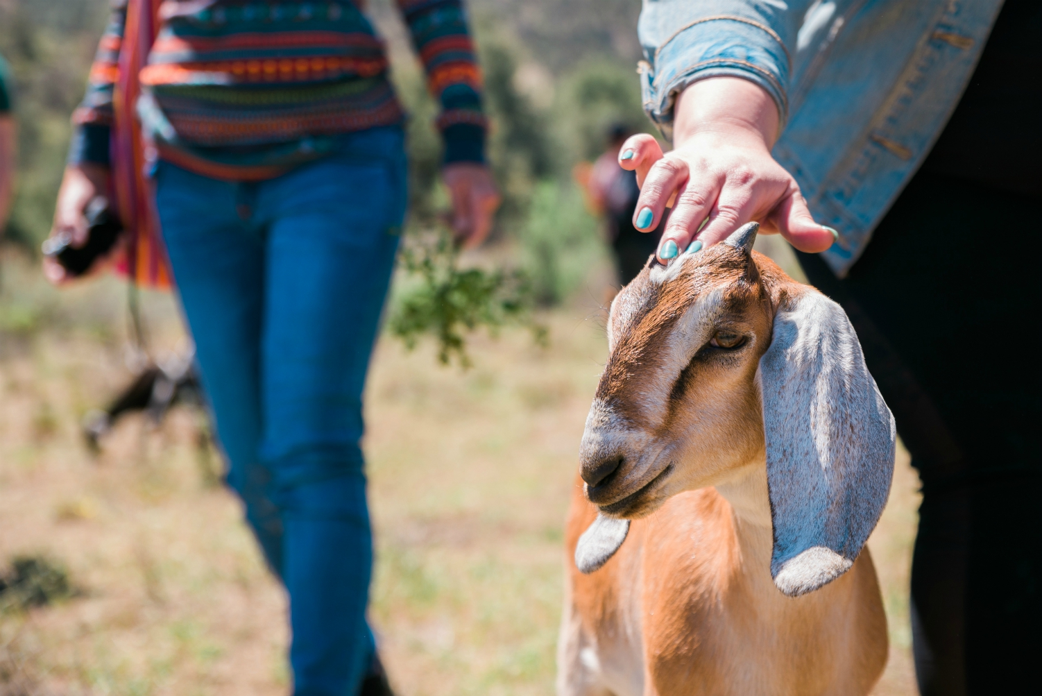 best goat encounter los angeles