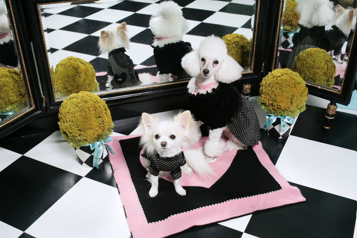 best dog sweaters fifi and romeo los angeles
