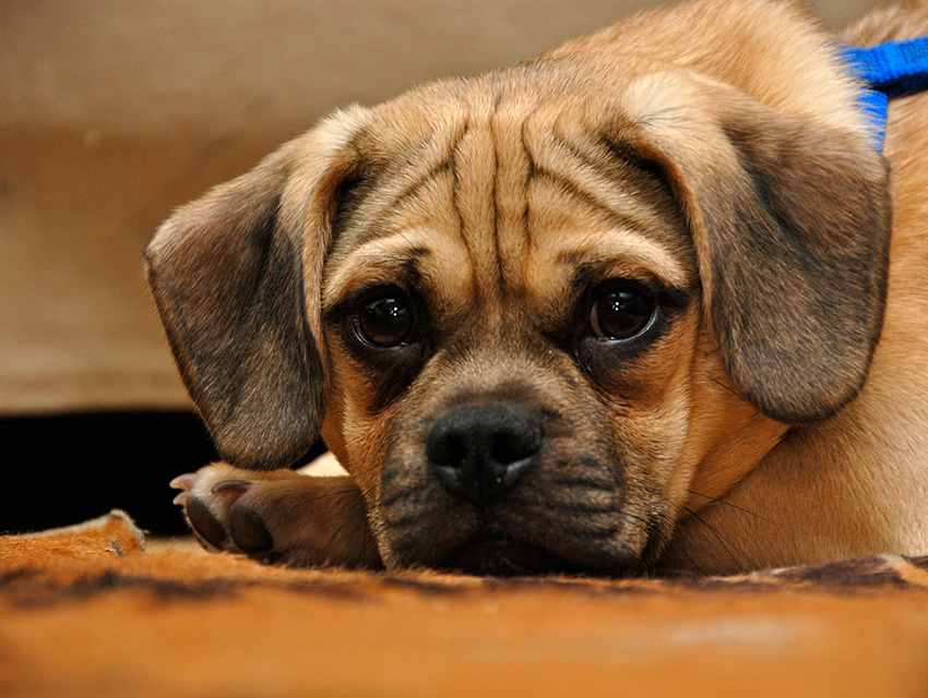 Antidepressants For Dogs Small