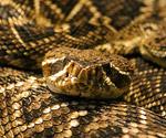 snakeavoidance