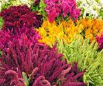flowermarket