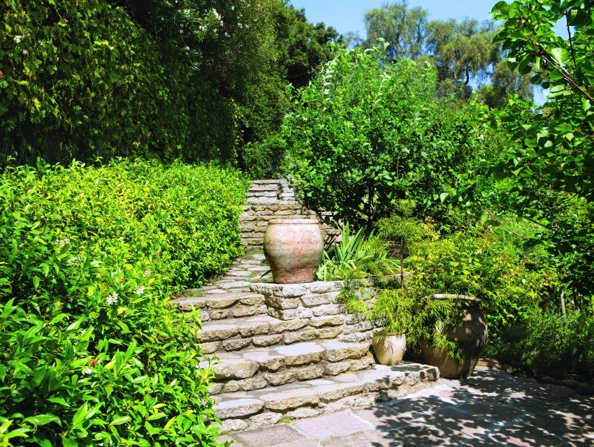Concrete from the driveway was recycled to build a tiered path along the terraced orchard. Fruit trees, from apricot to plum to quince, cover the hillside, along with rosebushes left over from when Vin Scully owned the house.