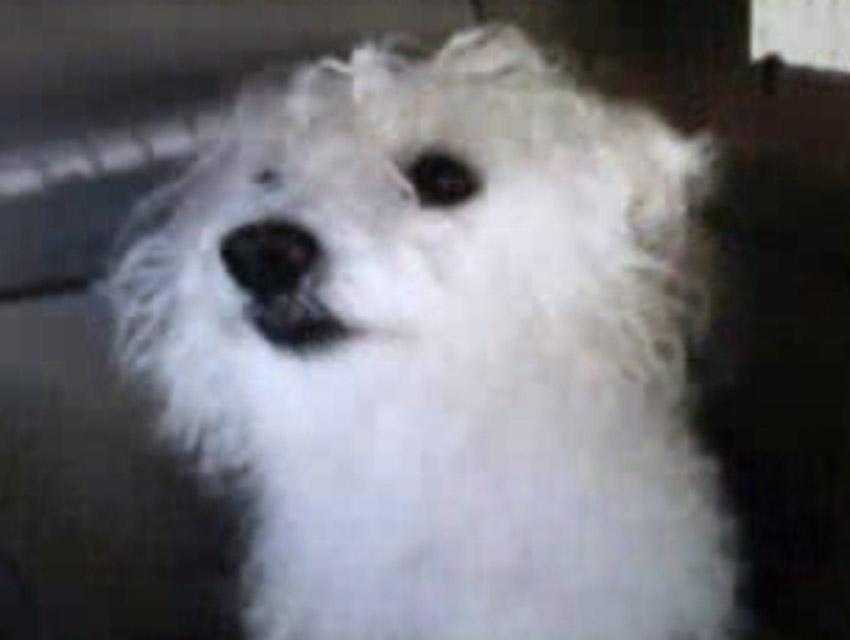 Stolen Echo Park Pup