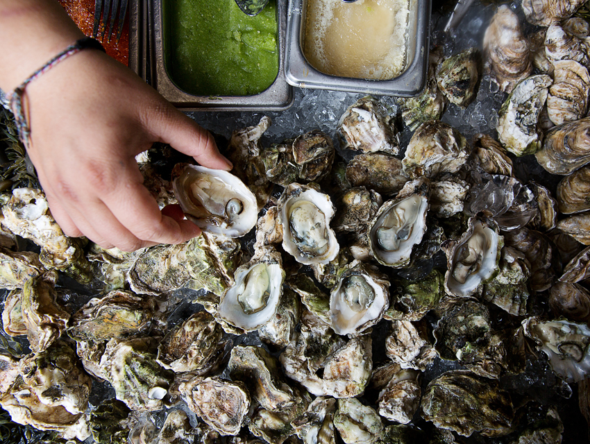 Downtown's Border Grill will be hosting an oyster bar.