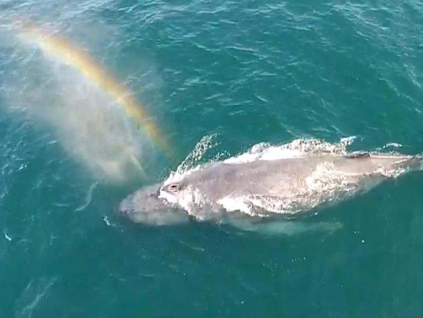 SoCal Whale