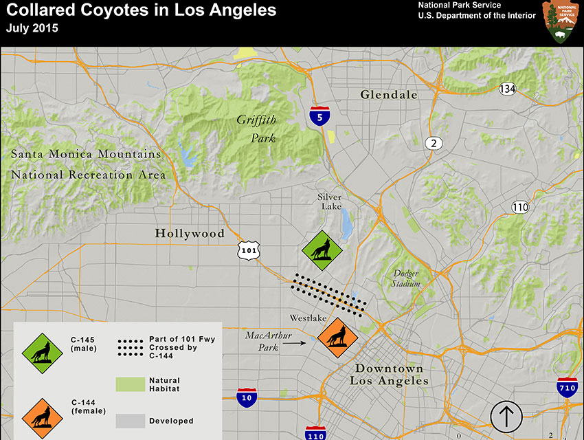 Researchers at the NPS put together a map to track the two coyotes around L.A.