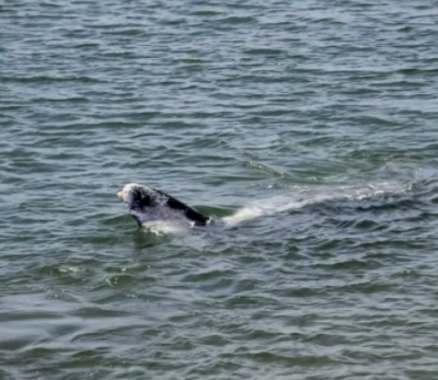 The baby whale may be hard to see, but trust us, it's adorable