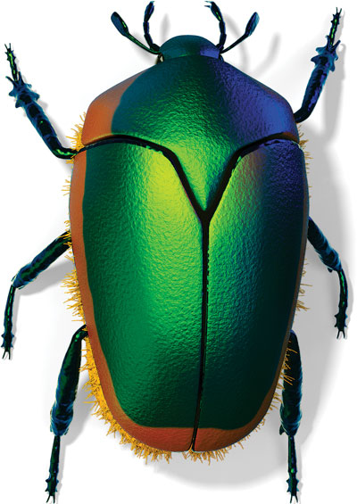 Green Fruit Beetle (Cotinus mutabilis)