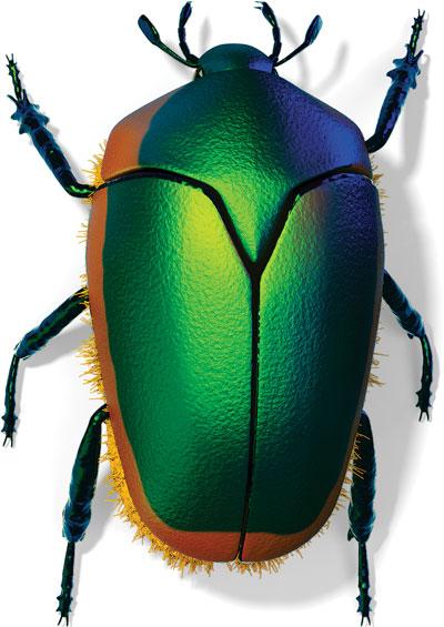 Green Fruit Beetle (Cotinus mutabilis)