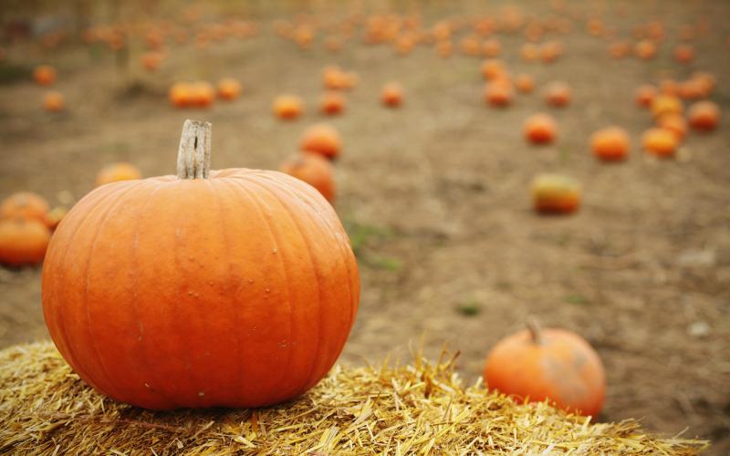 Best Pumpkin Patches Photograph