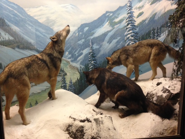 I could look at the dioramas in the NHM all day #HowDoYouMuseum