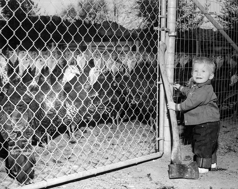 "Photograph caption dated November 23, 1955 reads, ""'I need some help with this gate!' - If Pop would just put down his camera and help with opening this heavy gate, young Steve Chase, 18 months, of Burbank, would be all set to get down to the business of providing family's Thanksgiving turkey for tomorrow. Valley's businesses, schools and industries will be closed to let families spend holiday at home."""