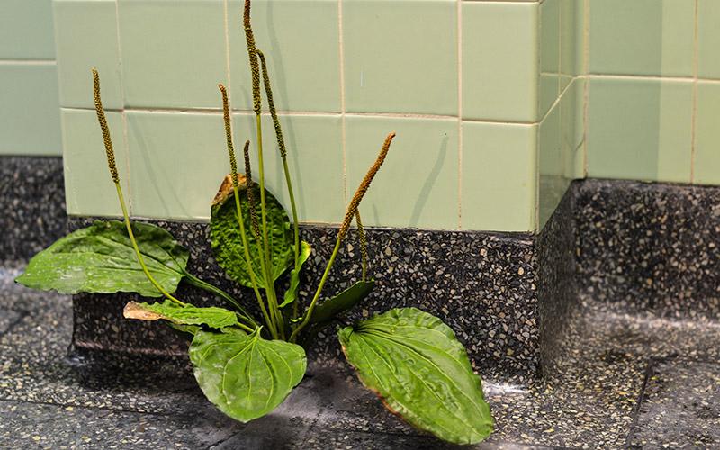 A plant growing through the hospital floor