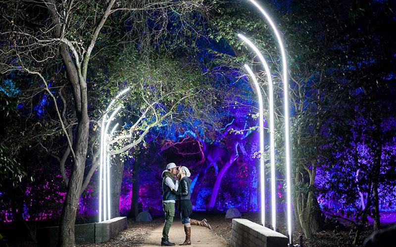 descanso - Forest Of Light Descanso Gardens December 15