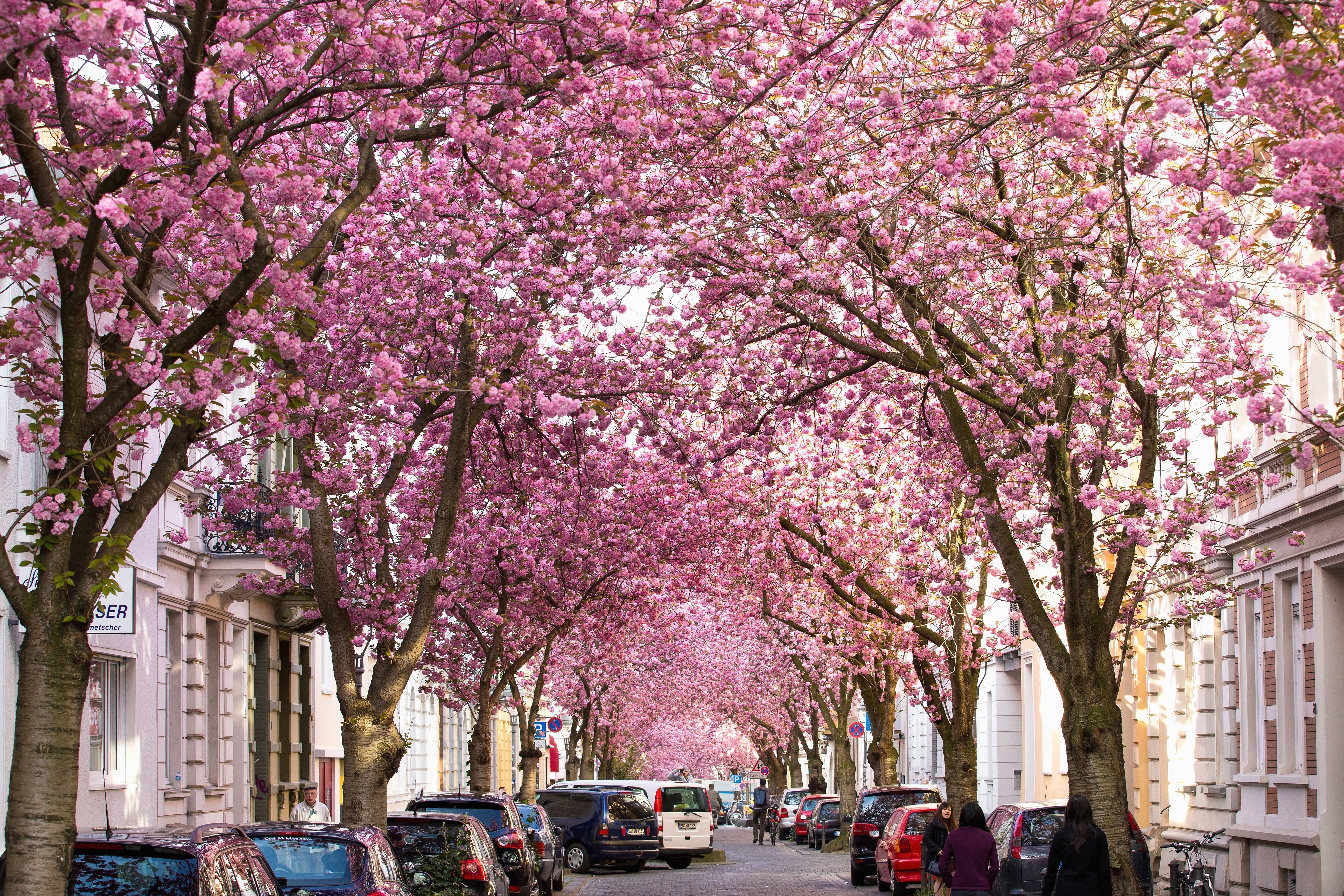 Where To See Stunning Cherry Blossoms In L A This Spring Los Angeles Magazine