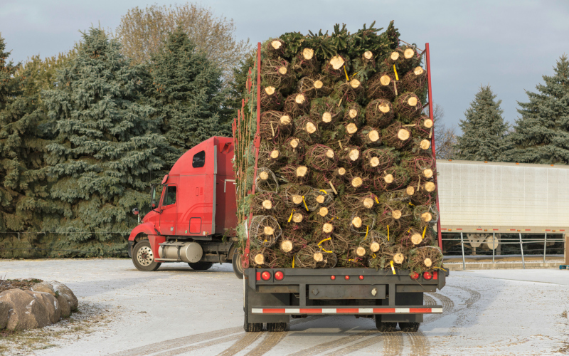 Christmas Tree Shortage.There S A Christmas Tree Shortage Consider Yourself Warned