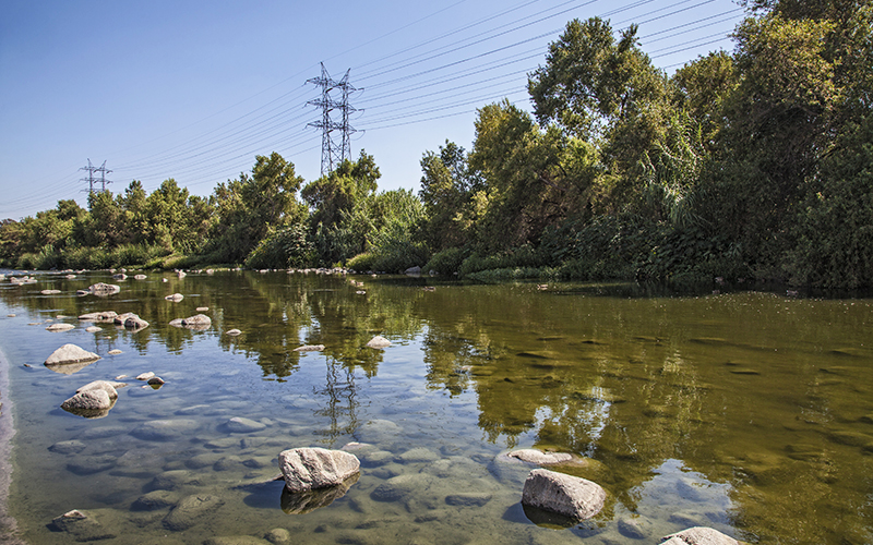 The L.A. River Is So Lush, If You Know Where to Look