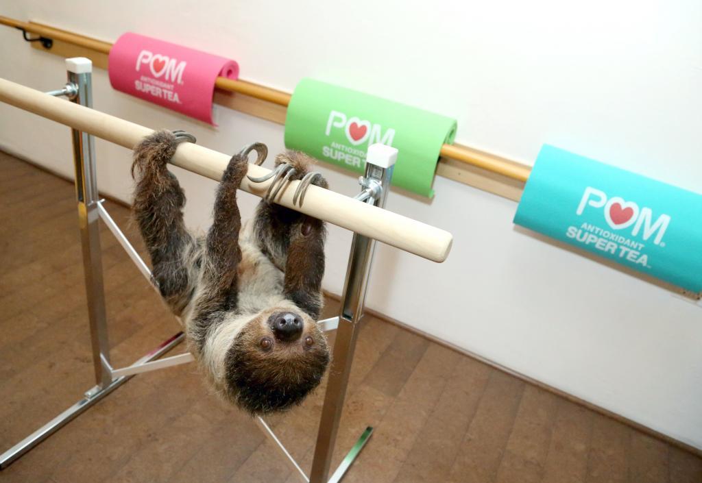 lola sloth barre class sloth yoga