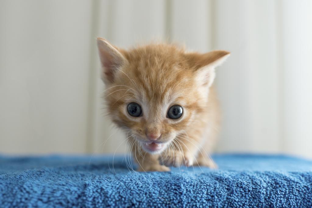 la-animal-shelters-kittens