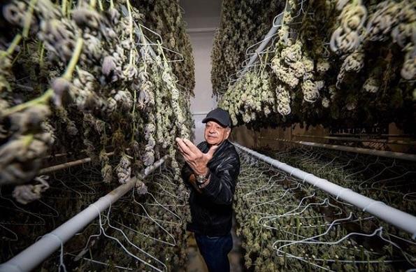 cheech marin museum marijuana art