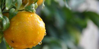 fallen fruit nonprofit los angeles historic state park edible orchard