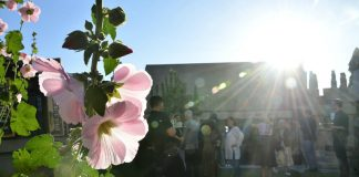 hollyhock house barnsdall art park frank lloyd wright things to do in l.a. this week