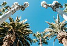 palm trees urban light lacma