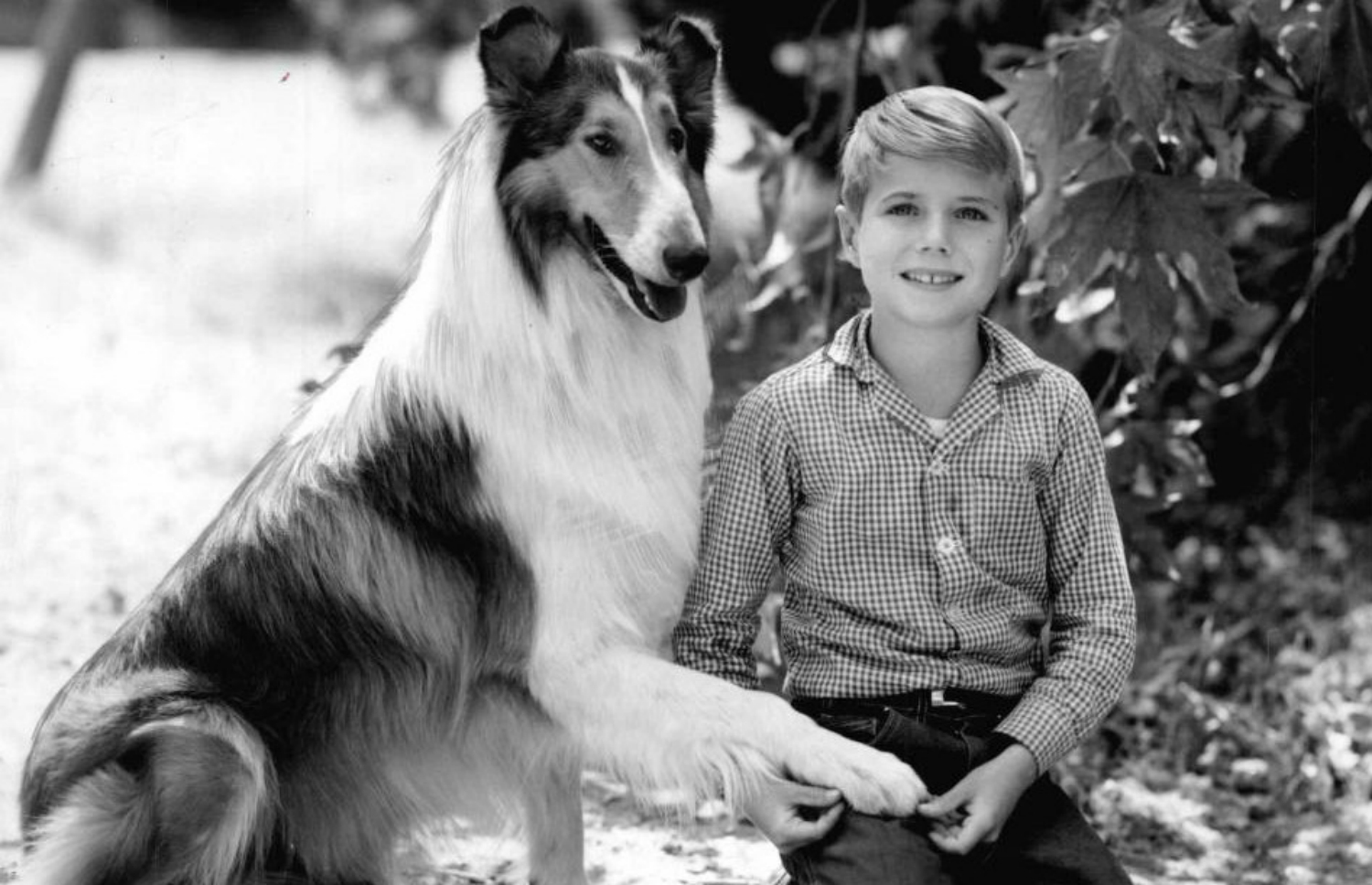 lassie hollywood dog training school los angeles