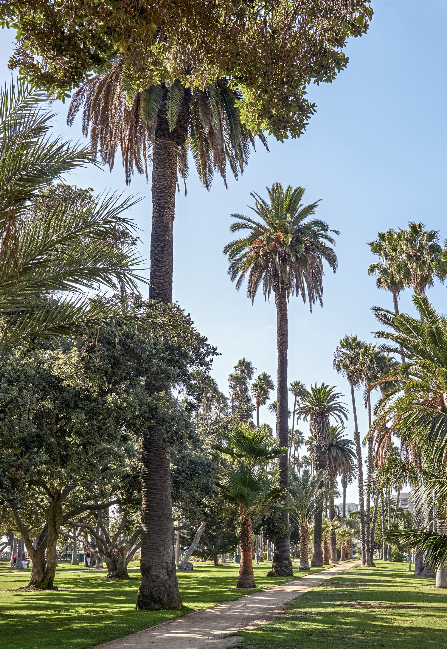 Can the Los Angeles We Know Survive the Death of Its Trees?