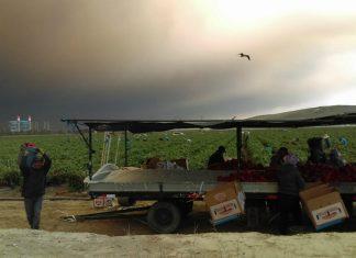 farmworkers wildfires camarillo instagram