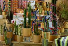 christmas cactus platform ponderosa sustainable christmas tree