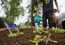 venice planters homeless community healing gardens