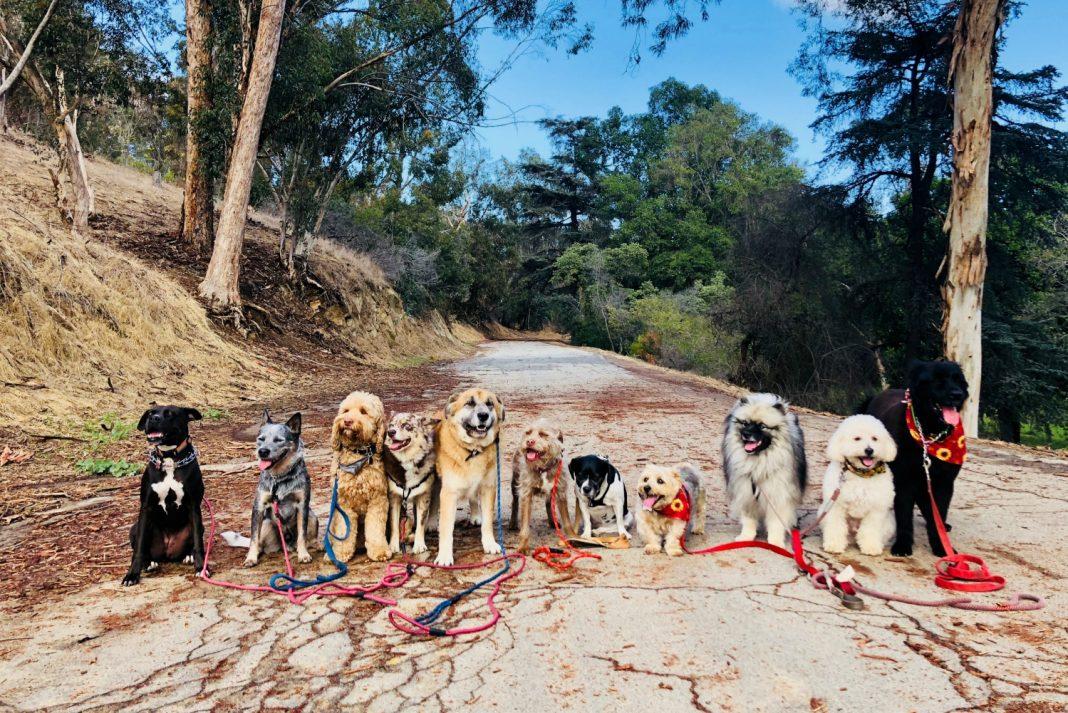 dog spa los angeles dog hikes los angeles