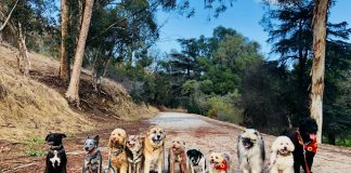 dog spa los angeles dog hikes los angeles