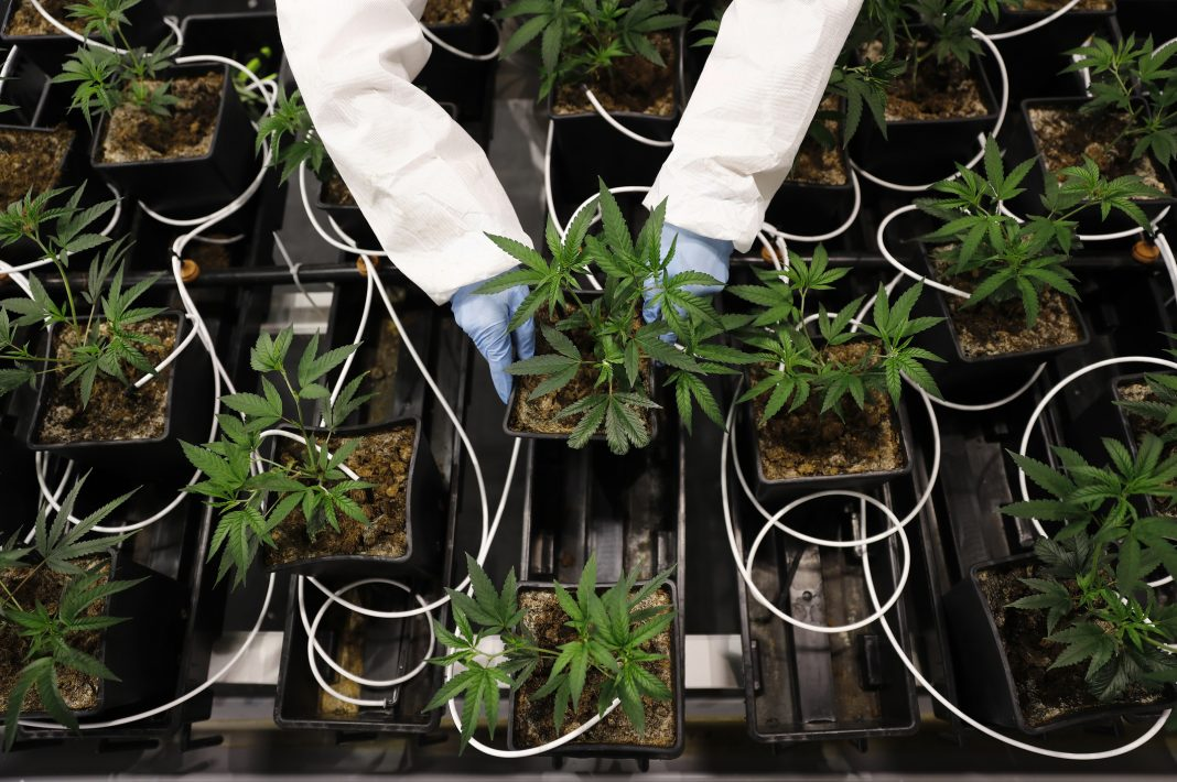 Marijuana Farm Odor Neutralizing Tech Is Helping This Local