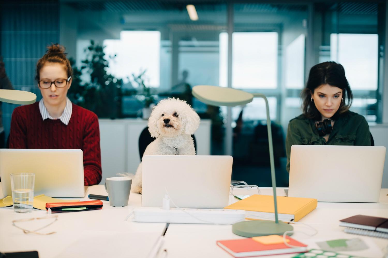 dogfriendlycoworking