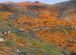 lake elsinore poppy superbloom shutdown