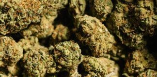 marijuana surplus california