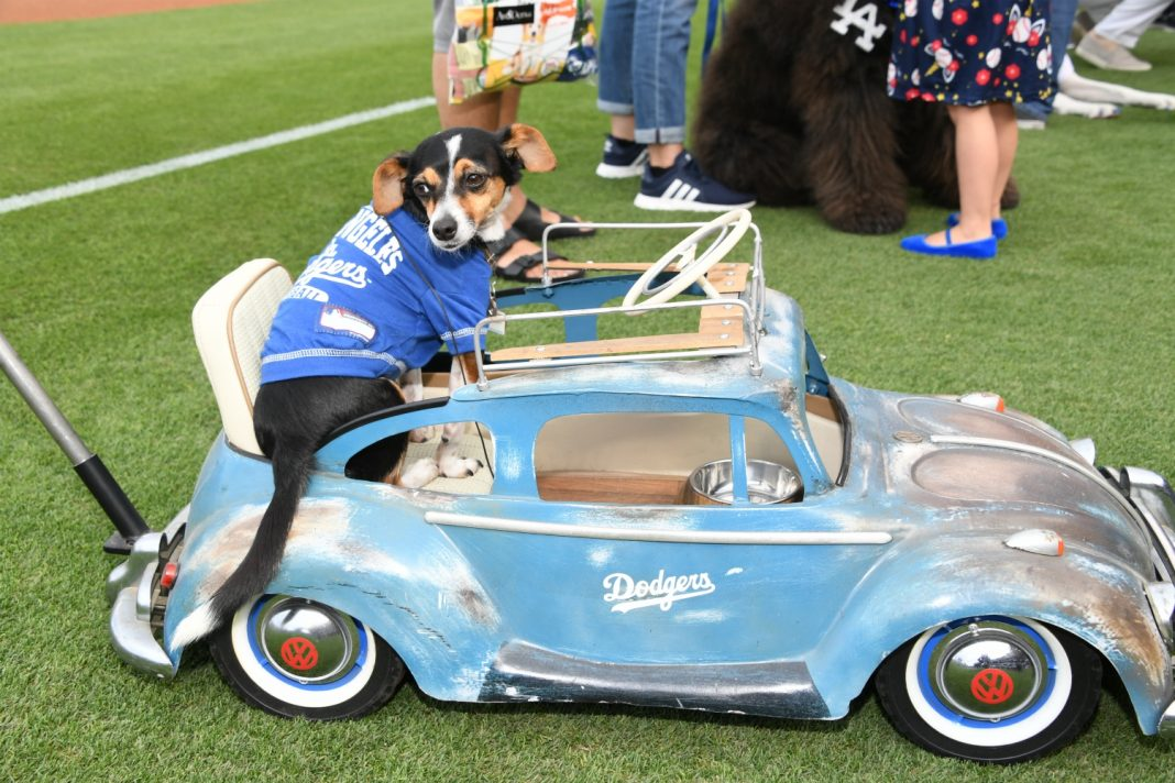 dodger dogs dodger stadium pups at the park