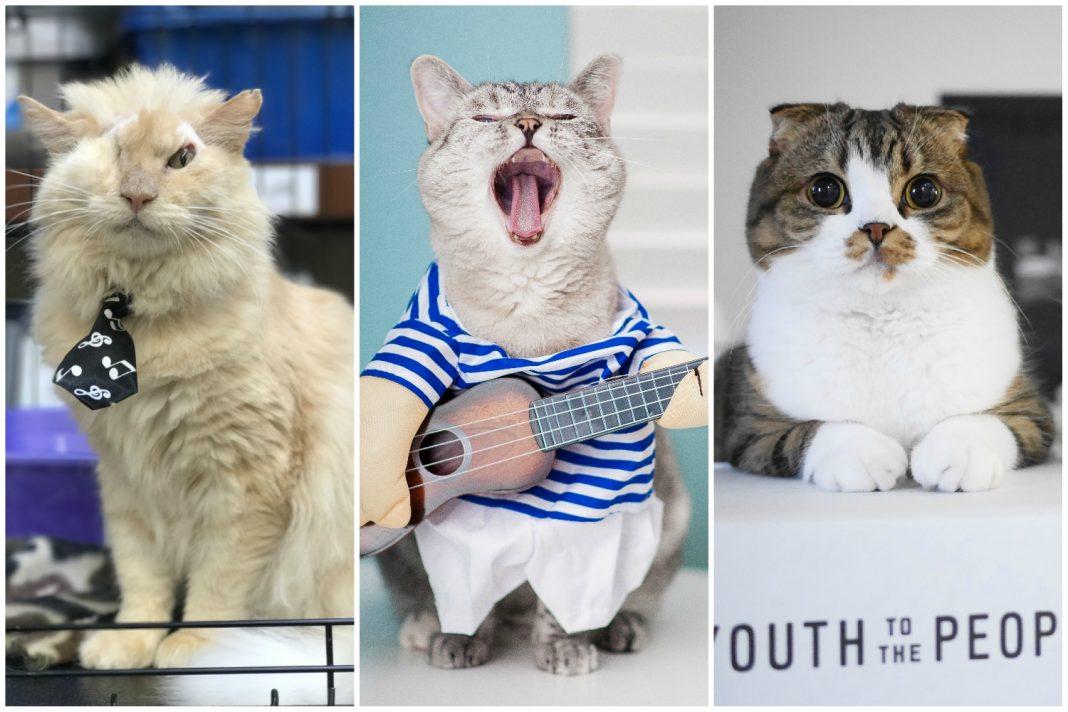 catcon 2019 cat influencers