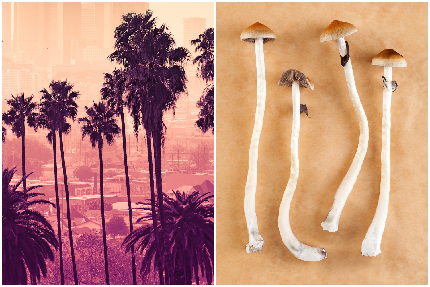 Could California Become the First State to Decriminalize Magic Mushrooms?