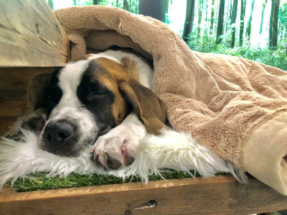best dog spa los angeles