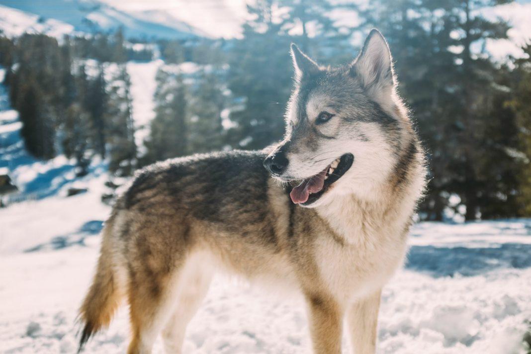 wolf hike los angeles