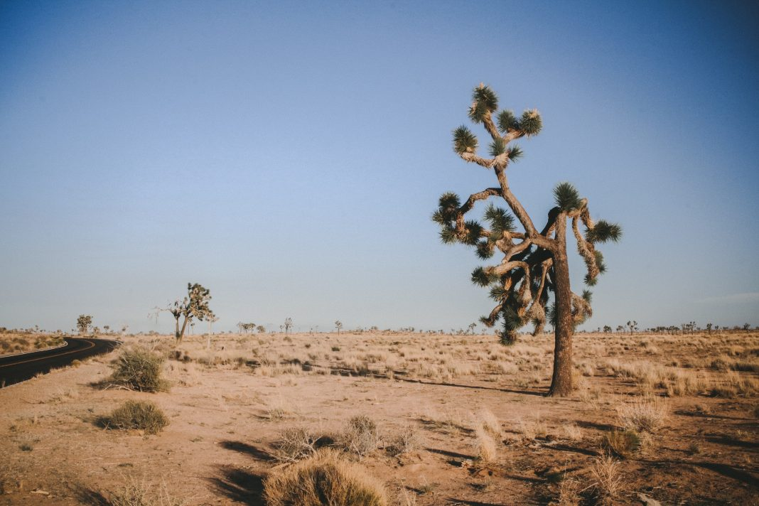 joshua tree upgrades joshua tree national park