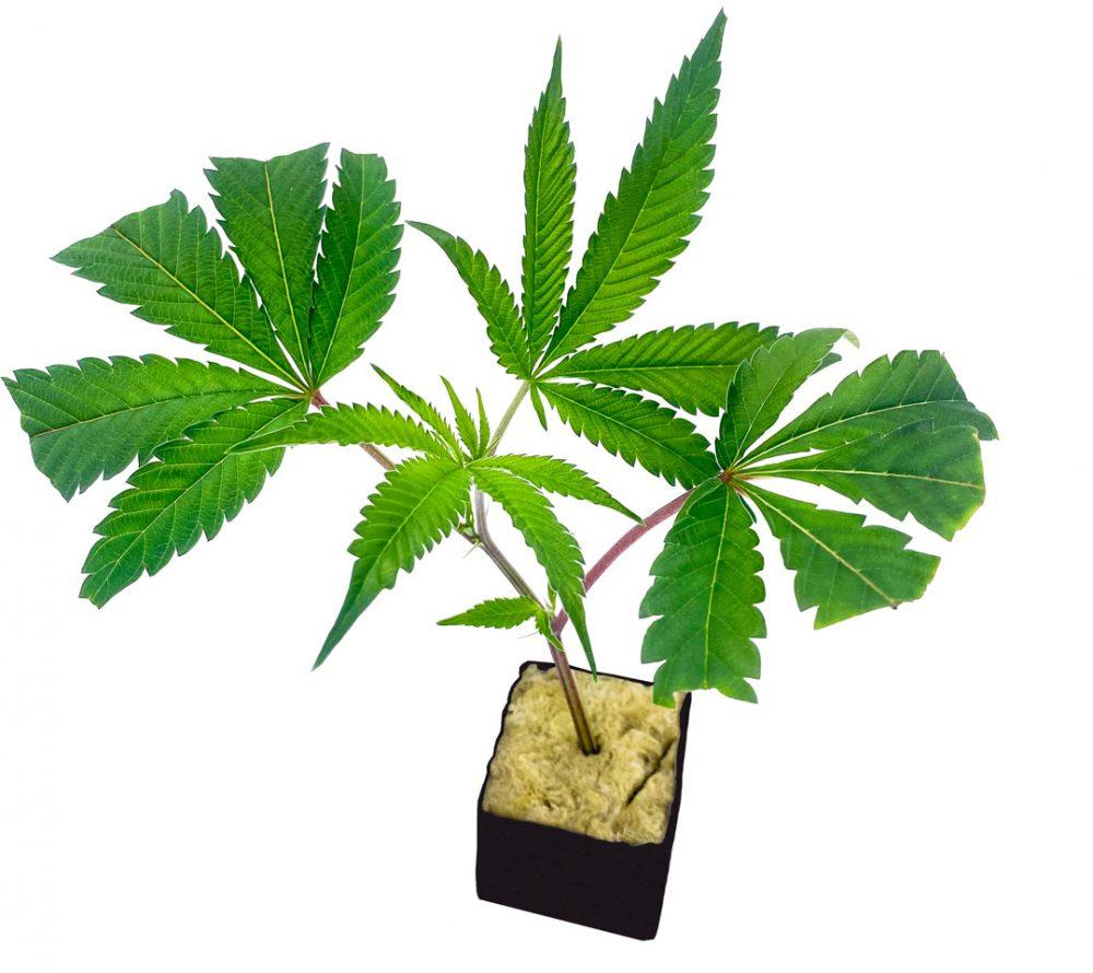 cannabis gift ideas 2020 holiday