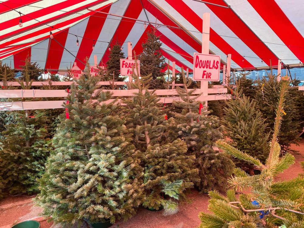 mr jingles christmas tree lot best place where to buy christmas tree in la