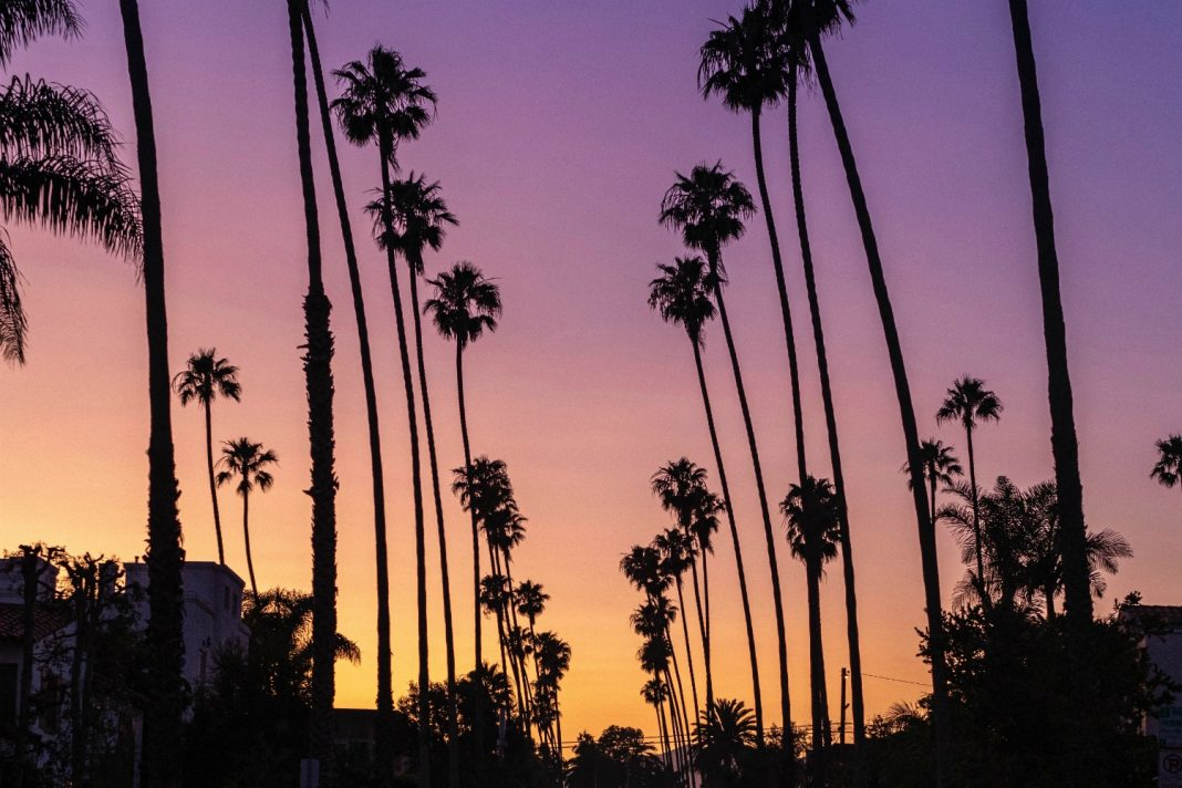 palm trees lean los angeles
