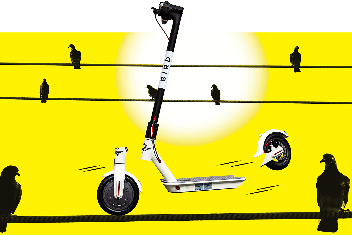 bird scooters pandemic