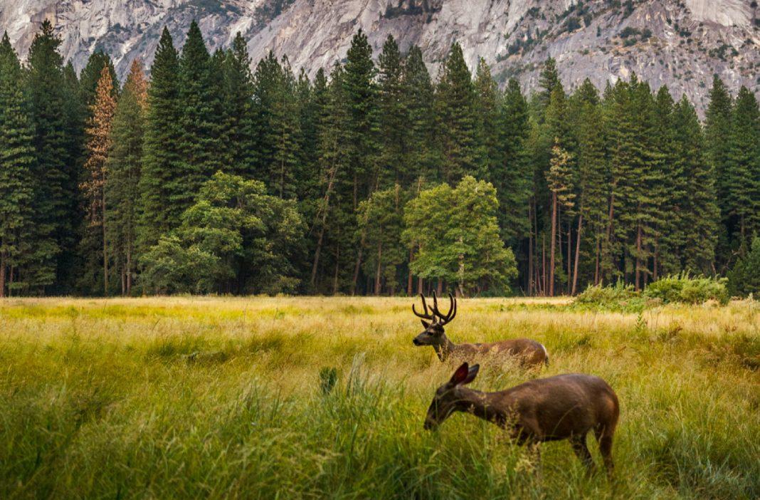 yosemite reopen wildlife national parks covid