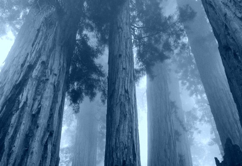 redwoods fire